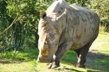 Wild Africa Trek 192